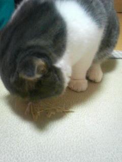 ぬこ_2010-03-28