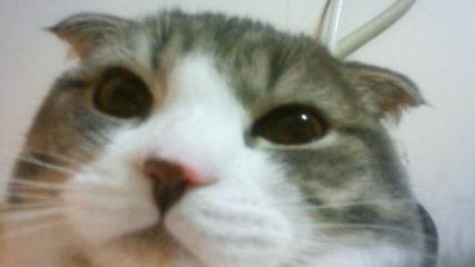ぬこ_2010-02-28