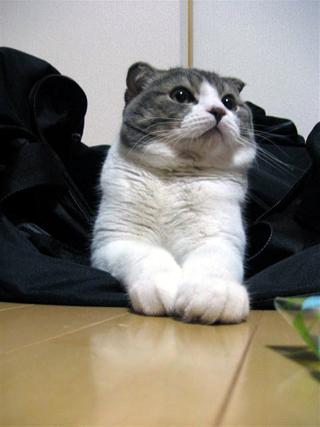 ぬこ_2010-03-20